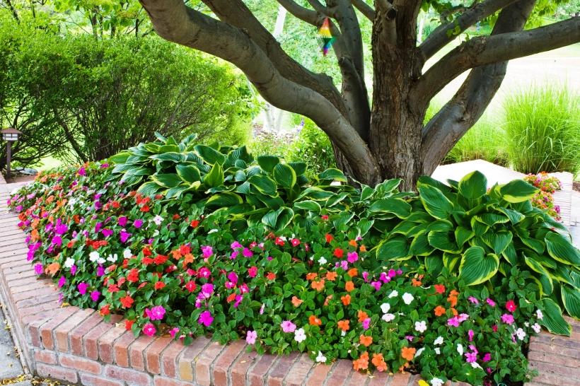 Balogh Gardens - Denver Gardening and Landscaping