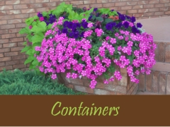 Balogh Gardens - Denver Gardening and Landscaping - Containers