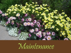 Balogh Gardens - Denver Gardening and Landscaping - Maintenance