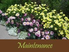 Balogh Gardens - Denver Gardening and Landscaping - Maintenance